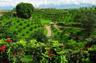 Salento Colombia Coffee Region