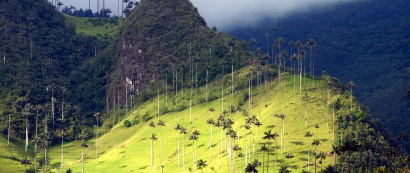 Salento treks - Cocora Valley