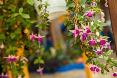 Salento Flowers Hostal Ciudad de Segorbe