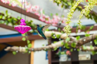 Salento Hummingbird Hostal Ciudad de Segorbe
